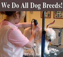 Pet Groomers - Columbus, NE - Canine Clipping Creations