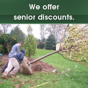 Arborist - Culpeper, VA - Scott's Landscaping & Tree - tree removal - We offer senior discounts.