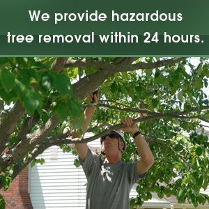 Tree Care Services - Culpeper, VA - Scott's Landscaping & Tree - tree trimming - We provide hazardous tree removal within 24 hours.