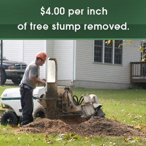 Stump Grinding - Culpeper, VA - Scott's Landscaping & Tree - stump grinding - $4.00 per inch of tree stump removed.
