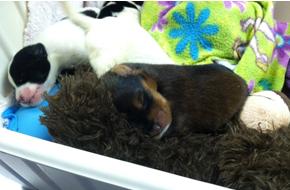 Puppies sleeping on a blanket