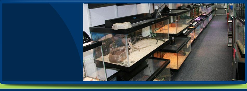 Exotic Pet Store | Oldsmar, FL | Herp Hobby Shop | 813-925-0041