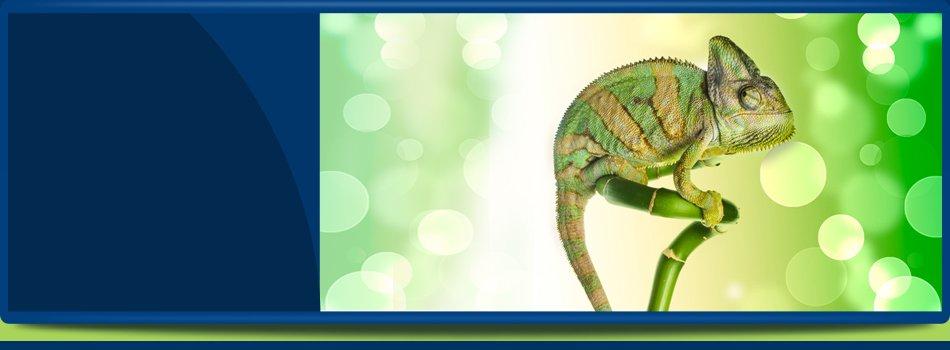 Exotic Pet Store | Oldsmar, FL | Herp Hobby Shop | 813-925-0041