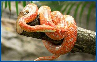 Reptile Supplies | Oldsmar, FL | Herp Hobby Shop | 813-925-0041