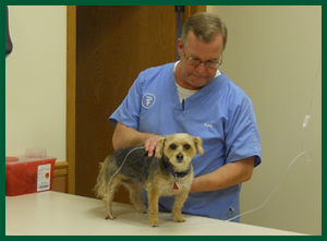 Vet dentistry | Gurnee, IL | Grand Animal Hospital | 847-249-7730