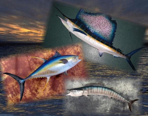 Bird fish taxidermy austin tx rheinlander world for Fish taxidermy prices