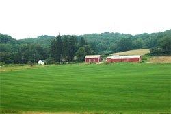 Turf Farm - Pittsburgh, PA - Reddi Green Turf Farms - Turf