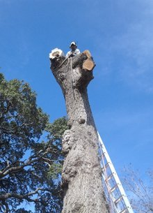 Tree Removal Reedville, TX