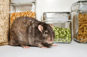 Rodent Control - Sevierville, TN - All Pro Pest Control