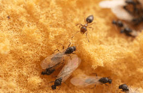 Ant Control - Sevierville, TN - All Pro Pest Control