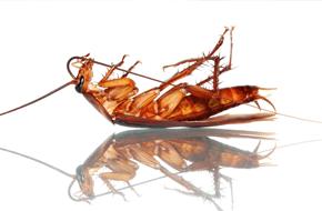 Roach Control - Sevierville, TN - All Pro Pest Control
