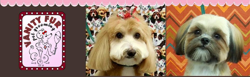 Pet Grooming   Summerfield, FL   Vanity Fur Pet Grooming   352-245-4585