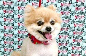 Pet Grooming | Summerfield, FL | Vanity Fur Pet Grooming | 352-245-4585
