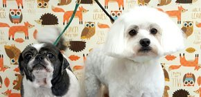 Play toys | Summerfield, FL | Vanity Fur Pet Grooming | 352-245-4585