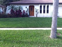Lawn Care - Holiday, FL - Nick's Lawn Care - Grass