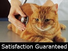 Pet Care Services - Clearfield, UT  - Heartsong Spay Neuter Clinic - Cat - Satisfaction Guaranteed
