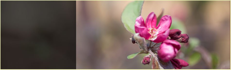 Nursery and Garden Center   Winfield, KS   Gottlob Lawn & Landscape LLC   620-222-8870   580-798-4874