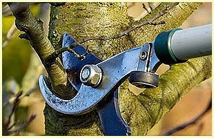 Nursery and Gardening   Winfield, KS   Gottlob Lawn & Landscape LLC   620-222-8870   580-798-4874
