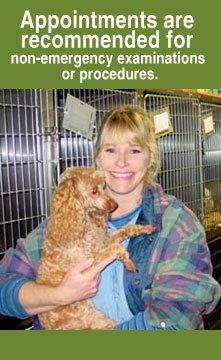 Animal Hospital - Hampton, VA - Todds Lane Veterinary Hospital