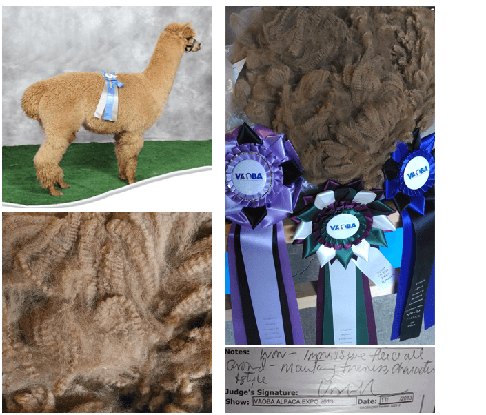 alpaca pricing   Monroe, NC   Awesome Alpacas   704-283-7253