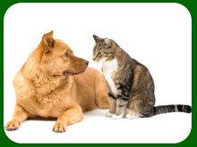 Veterinarian - Cut Bank, MT - Grass Winds Veterinary Clinic