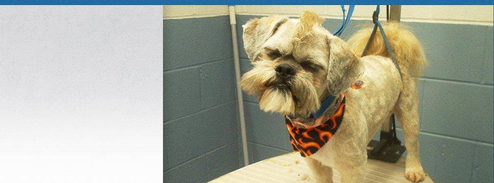 Pet Supplies | Peninsula, OH | Heartland Kennels | 330-928-3705