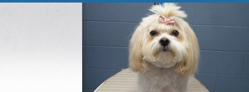 Pet Grooming | Peninsula, OH | Heartland Kennels | 330-928-3705