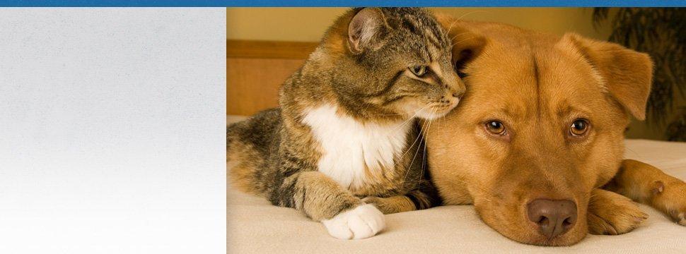 Pet Boarding | Peninsula, OH | Heartland Kennels | 330-928-3705