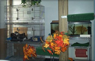 Cat Boarding | Peninsula, OH | Heartland Kennels | 330-928-3705