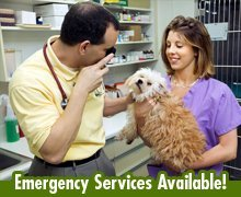 Pet Care Services - Warsaw, IN - Sasso Veterinary Hospital