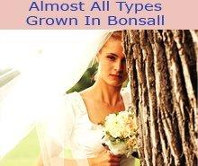 Florists - Bonsall, CA - Mike's Flower Shop