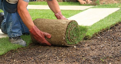 Lawn sodding