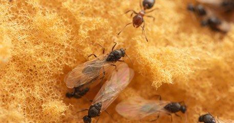 Household Pest