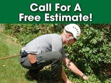 Tree Care - Vassar, MI - A Cut Above Tree Service - Tree Trimming - Call For A Free Estimate!