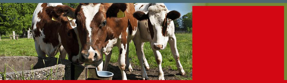 Animals feeds | Salisbury, MD | The Hardware Store | 410-742-4477