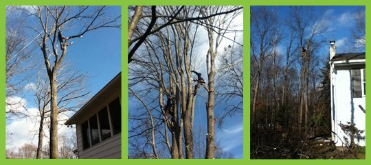 Lawn Care Service - Harveys Lake, PA - Big Woody's Tree Service & Landscaping