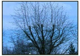 Tree Information  | Columbus, IN | Vertical Landscaping | 812-212-3326