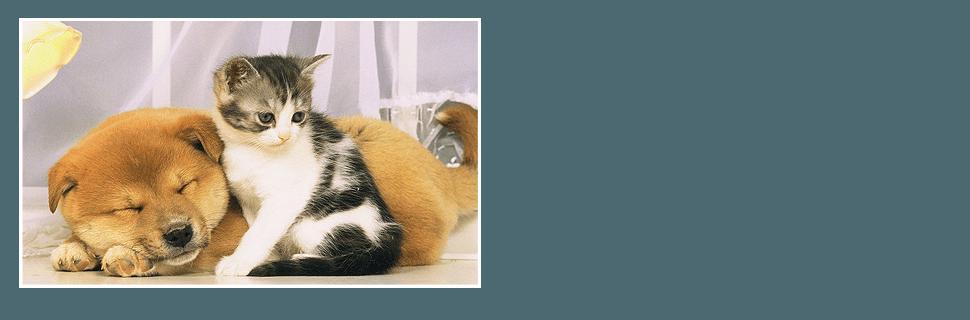 Pet Boarding Rates Joplin Mo Green Acres Getaway
