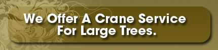Tree Service - Memphis, TN - Butler Tree Service - We Offer A Crane Service For Large Trees.