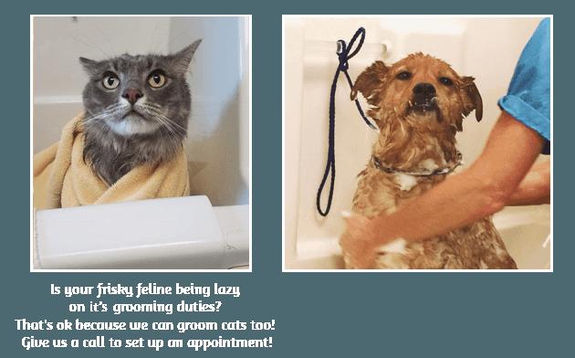 Dog Grooming | Terre Haute, IN | Dapper Dog Pet Grooming & Boarding | 812-478-2222