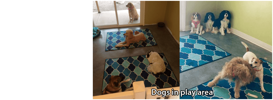 Puppy Grooming | Terre Haute, IN | Dapper Dog Pet Grooming & Boarding | 812-478-2222