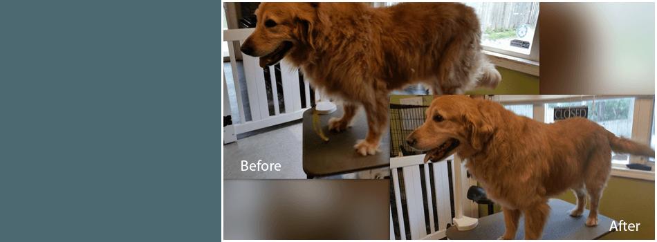Kitten Grooming | Terre Haute, IN | Dapper Dog Pet Grooming & Boarding | 812-478-2222