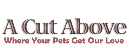 dog grooming | Paso Robles, CA | A Cut Above | 805-237-7315