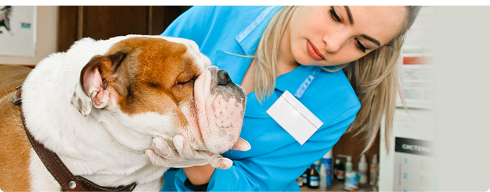Dog being checked-up by a veterinarian