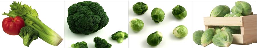 broccoli seeds - Weatherford,  TX  - Dillard Feed & Seed Inc. - 817-596-8271