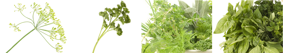 Parsley seeds - Weatherford,  TX  - Dillard Feed & Seed Inc. - 817-596-8271
