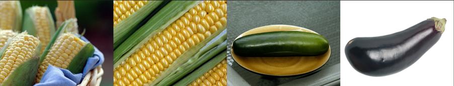eggplant seeds - Weatherford,  TX  - Dillard Feed & Seed Inc. - 817-596-8271