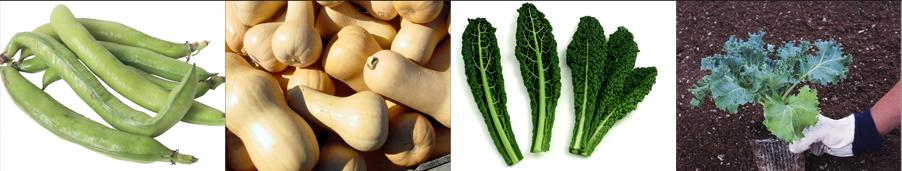 green bean seeds - Weatherford,  TX  - Dillard Feed & Seed Inc. - 817-596-8271