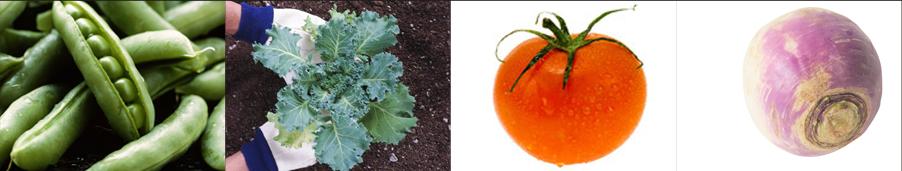 tomato seeds - Weatherford,  TX  - Dillard Feed & Seed Inc. - 817-596-8271