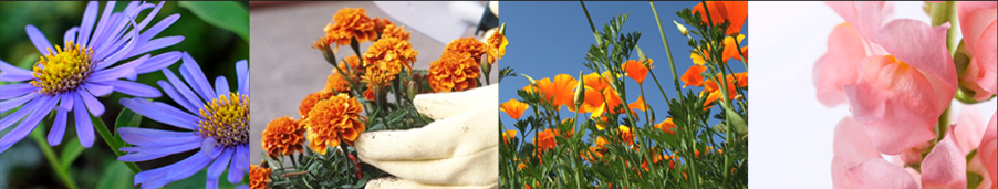 Flower Seed - Weatherford,  TX  - Dillard Feed & Seed Inc. - 817-596-8271